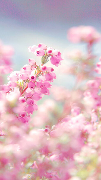 Aesthetic Pink Flowers