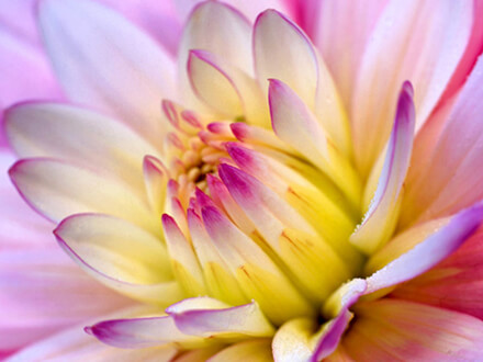 Aesthetic Water Lily Flower