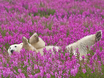 Bear In Purple Flowers