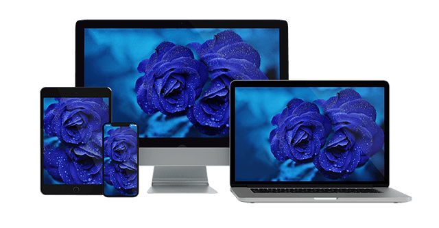 Ultra Hd Blue Rose Wallpaper Collection For All Your Devices