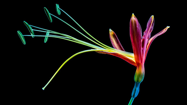 Colorful Flower Desktop Wallpaper ...