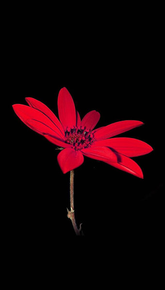 Cute Red Flower