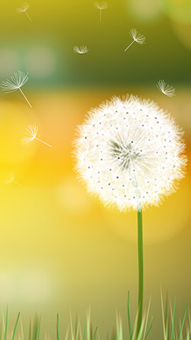 Dandelion Breeze Wallpaper For Phone ...