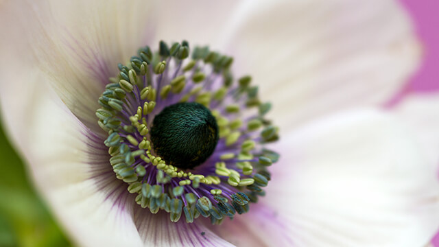 Eye Of The Flower