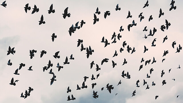 Flying Free Birds Desktop Wallpaper ...
