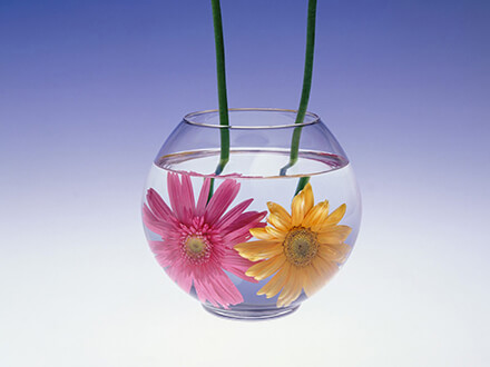 Gerbera In Glass Flowers