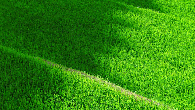 Grassy Terrace Desktop Wallpaper ...