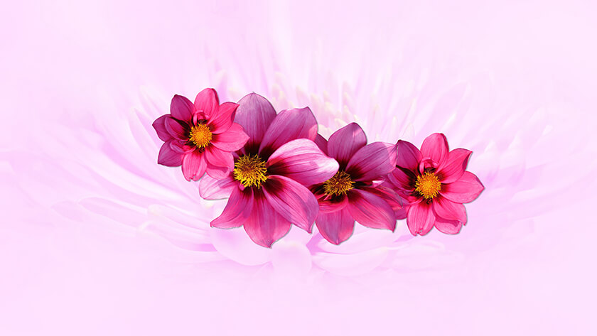 Just Pink Flowers