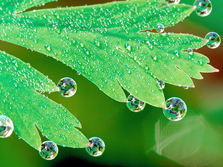 Leaf With Waterdrop Flowers