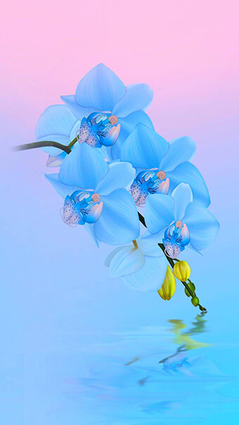 Light Blue Flowers