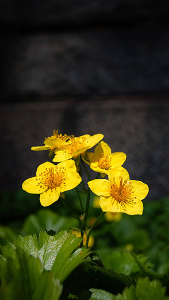 Lovely Yellow Flowers