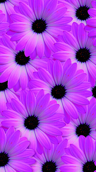 Purple Petal Flowers
