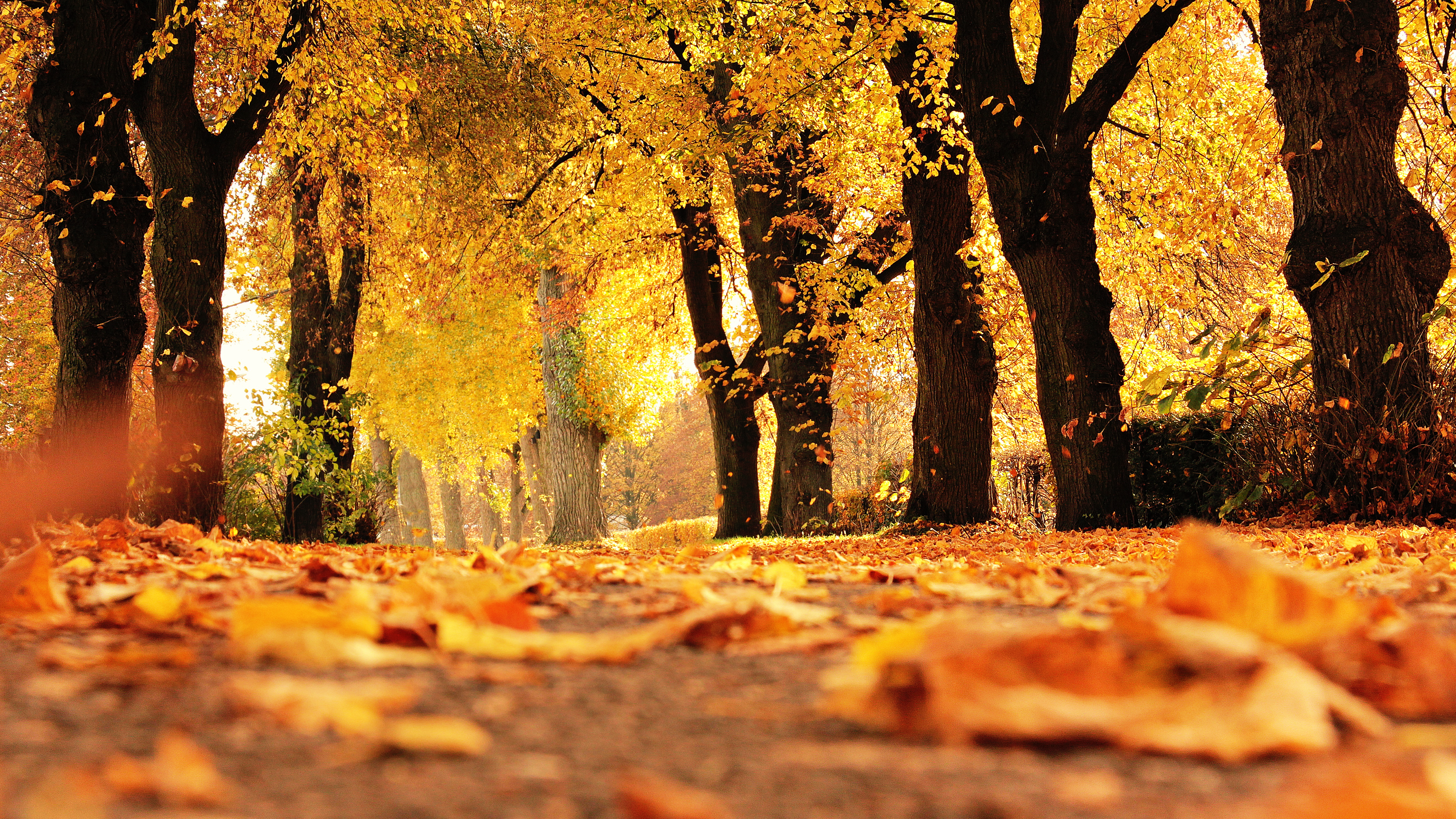download this free autumn trees tablet wallpaper in hd or 4k 0010