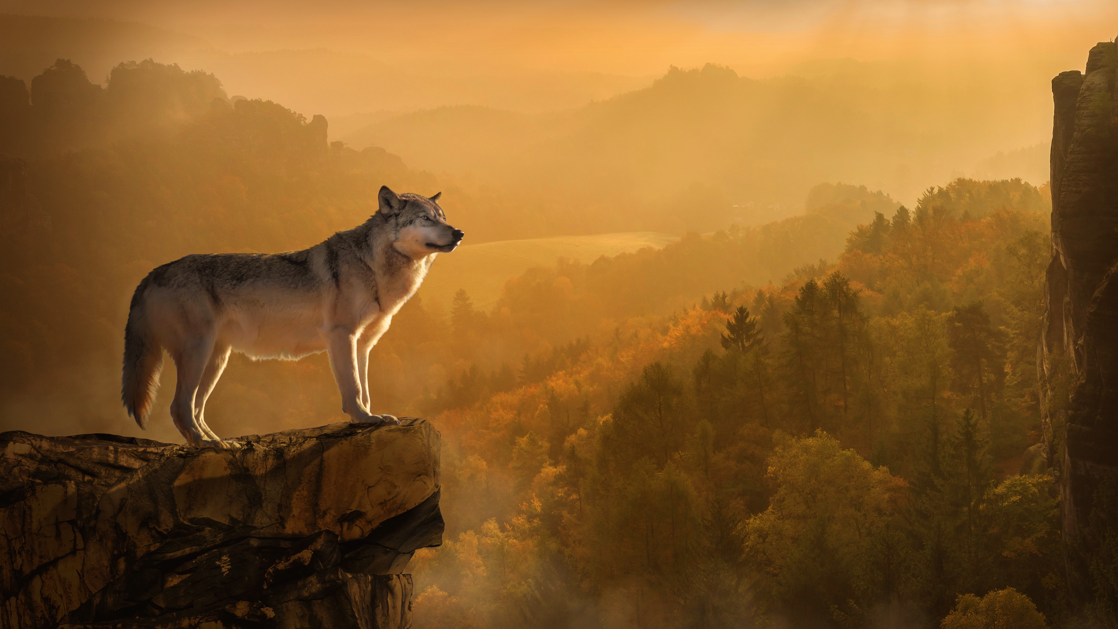 Download free hd autumn wolf desktop wallpaper in 4k 0011 - All animals hd wallpapers ...