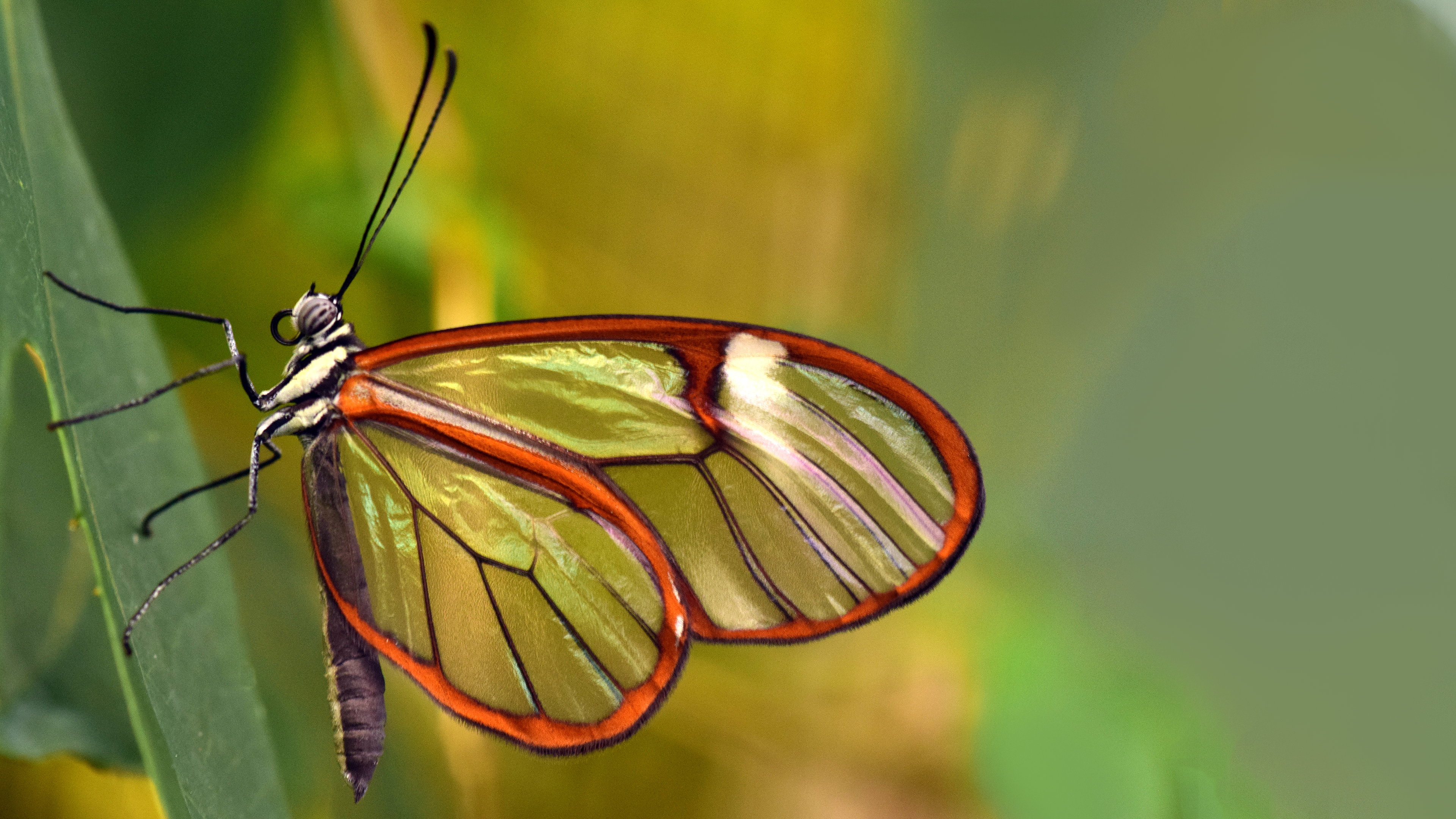 Beautiful Butterfly 4K Wallpaper Download