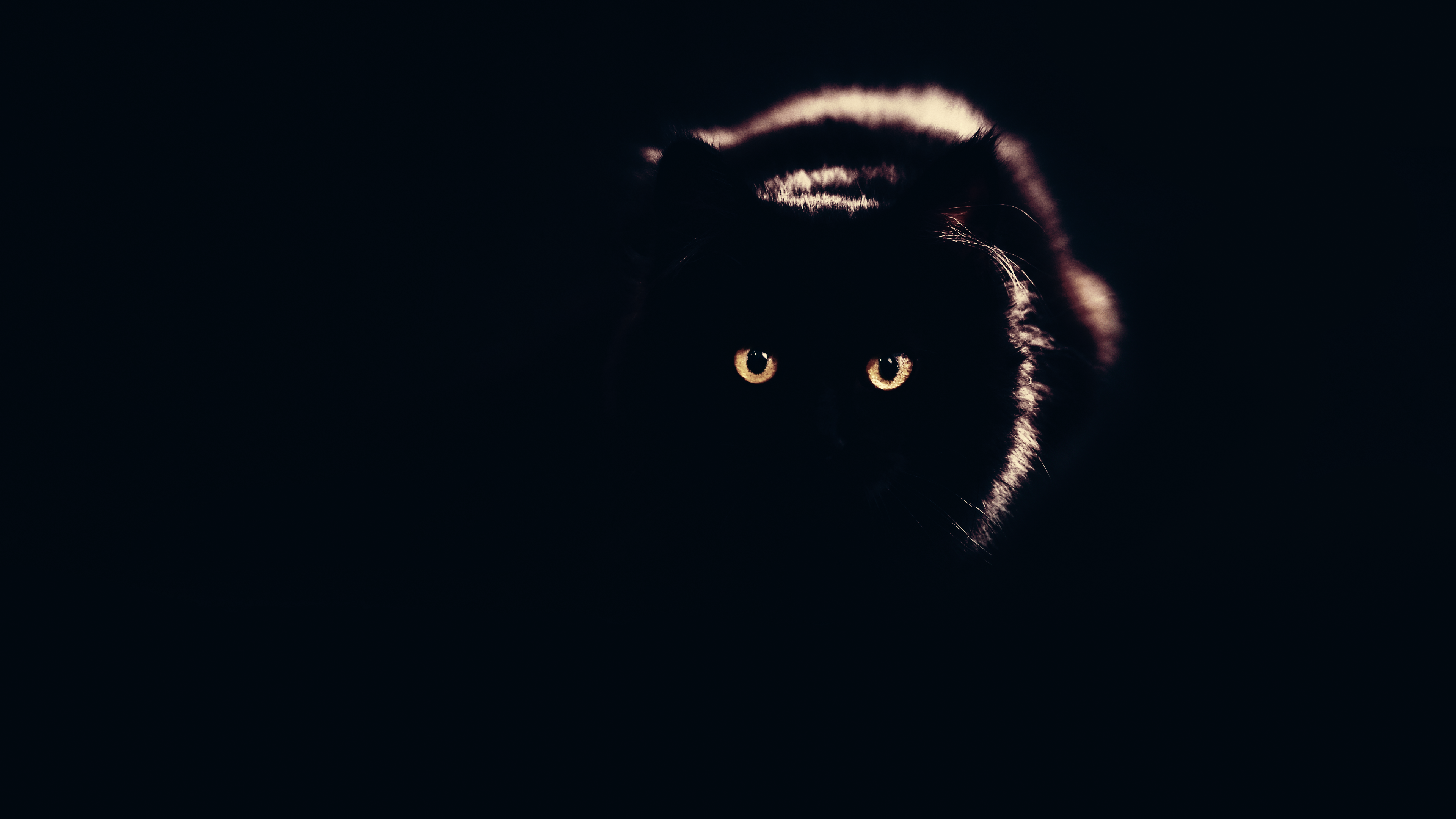 4k Wallpaper Wallpaper By Gstblack: Download Free HD Black Cat Desktop Wallpaper In 4K ...0046