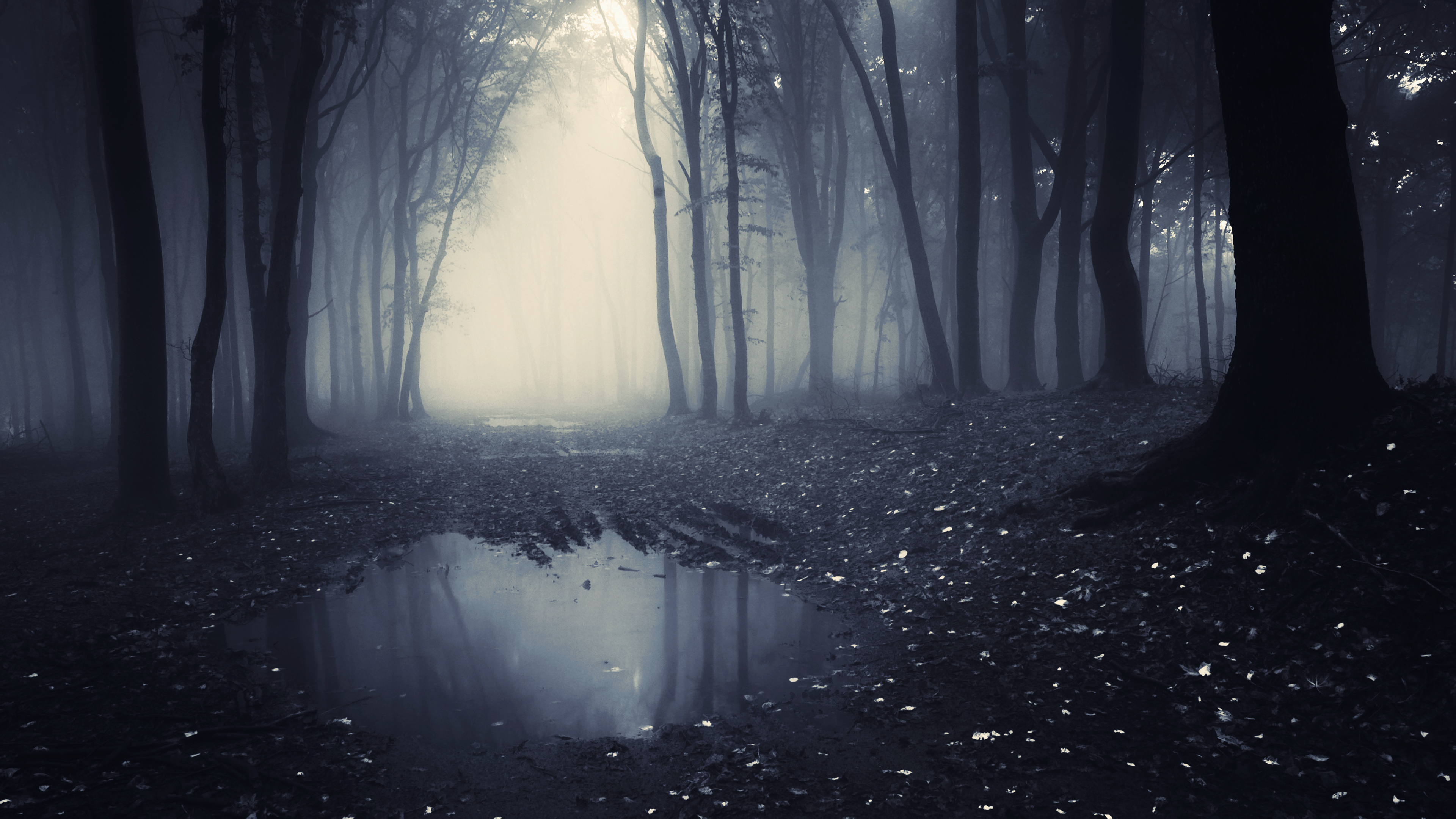 download free hd dark forest desktop wallpaper in 4k 0131