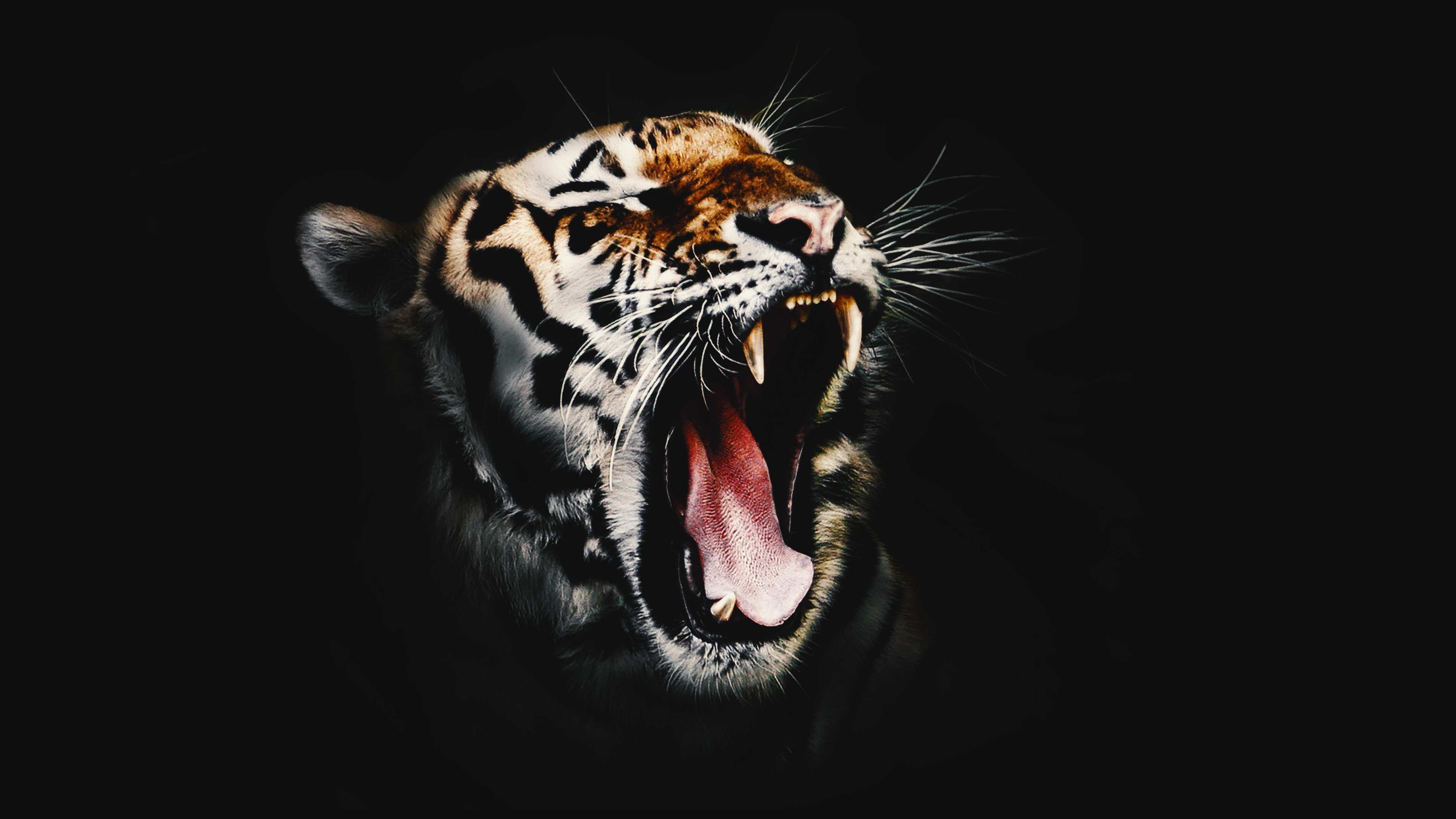 Download Free Hd Wicked Tiger Desktop Wallpaper In 4k 0287