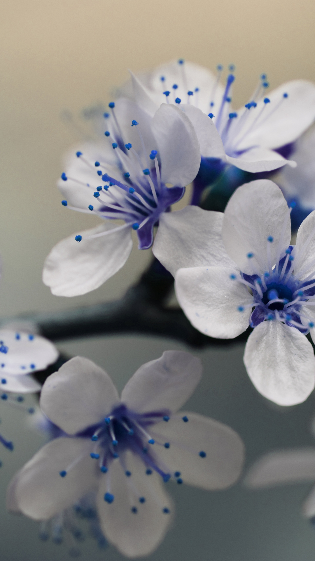 Free Hd Beautiful Blue Flowers Iphone Wallpaper For Download 0314