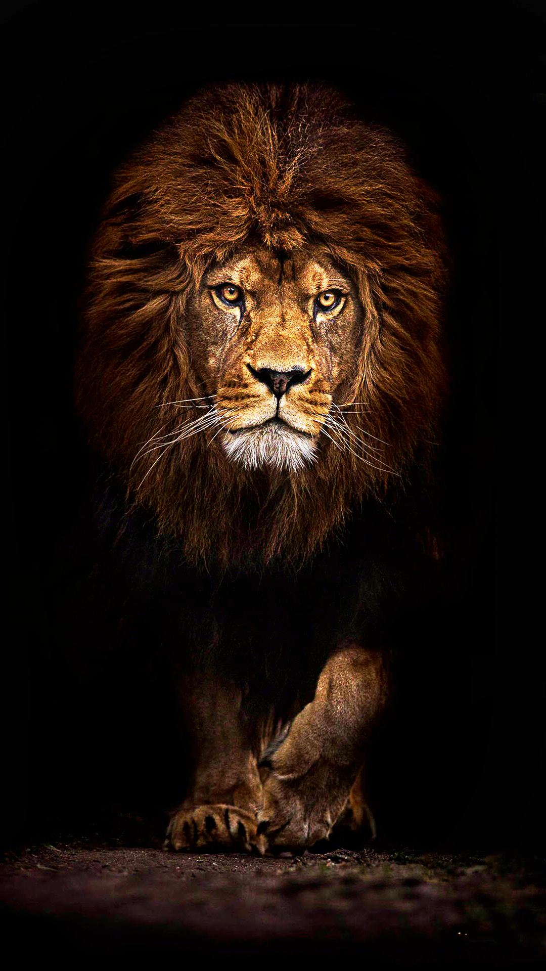Ultra Hd Mufasa Lion Wallpaper For Your Mobile Phone 0463