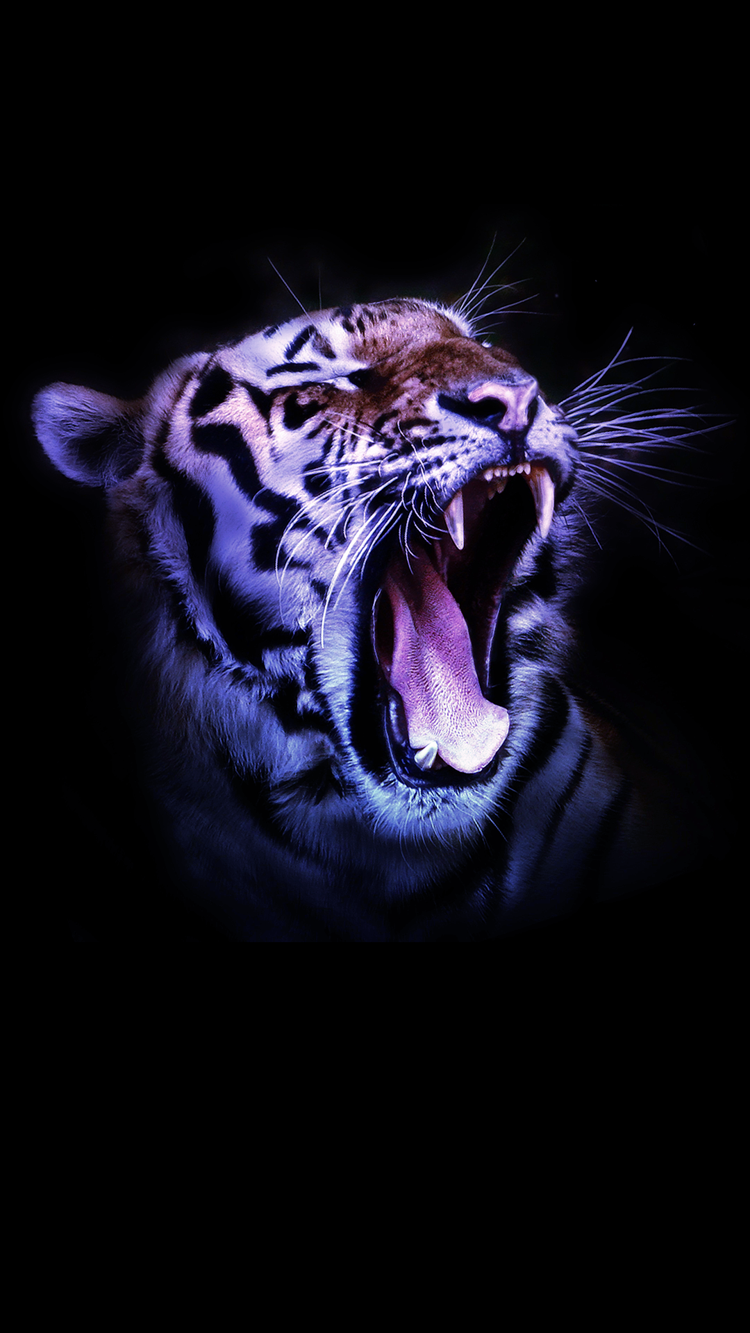 Ultra Hd Wildcat Tiger Wallpaper For Your Mobile Phone 0571