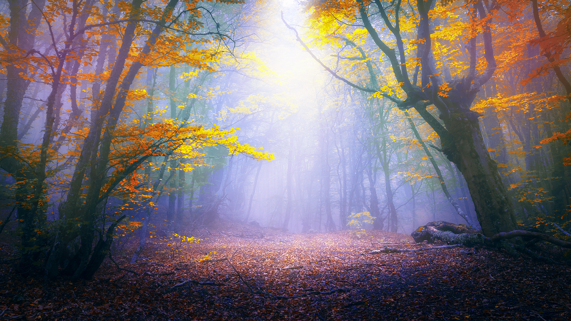 Download this free enchanted forest tablet wallpaper in hd or 4k 0165 - Tablet wallpaper 4k ...