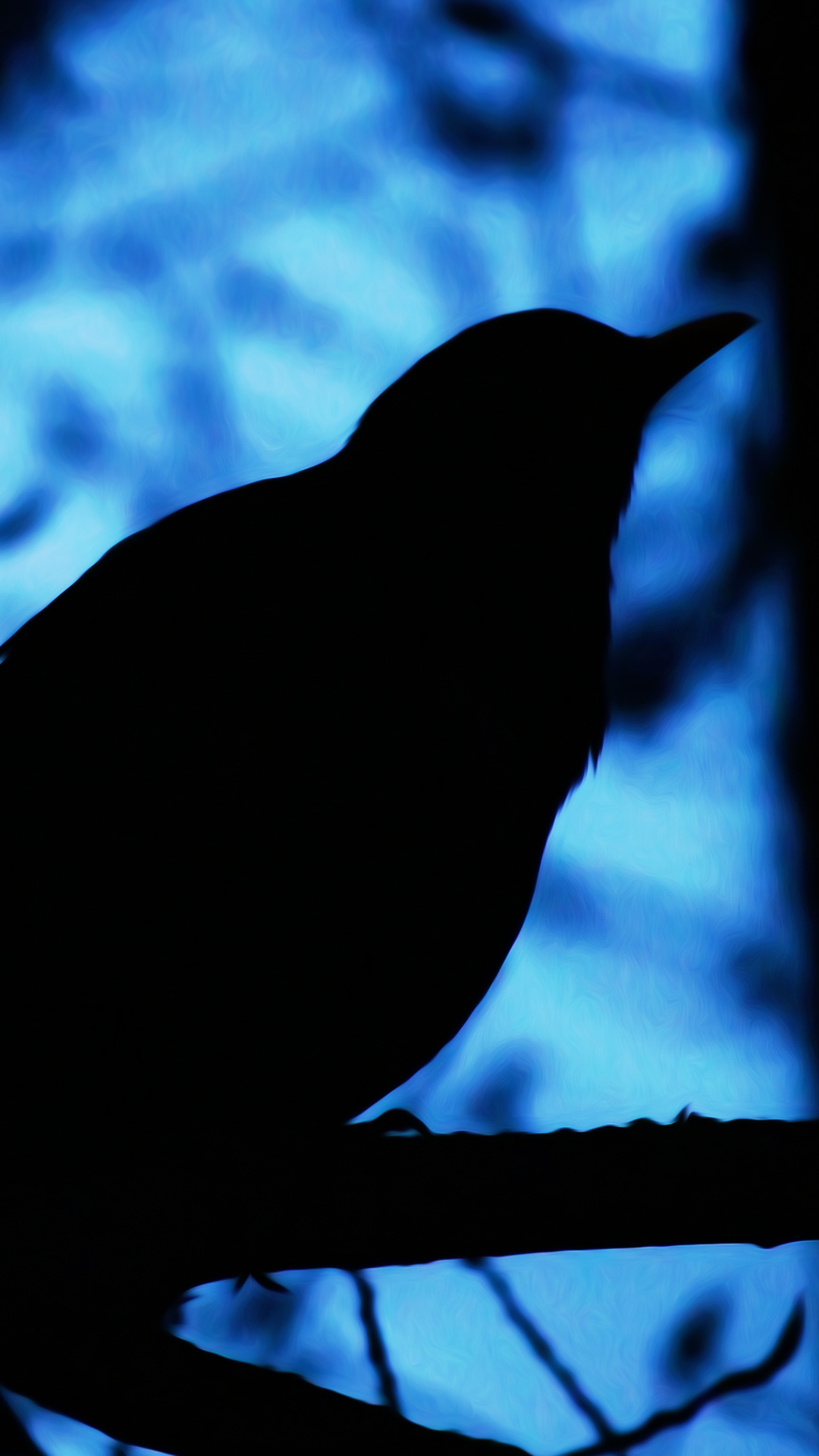Download our hd black bird wallpaper for android phones - Black wallpaper for android download ...