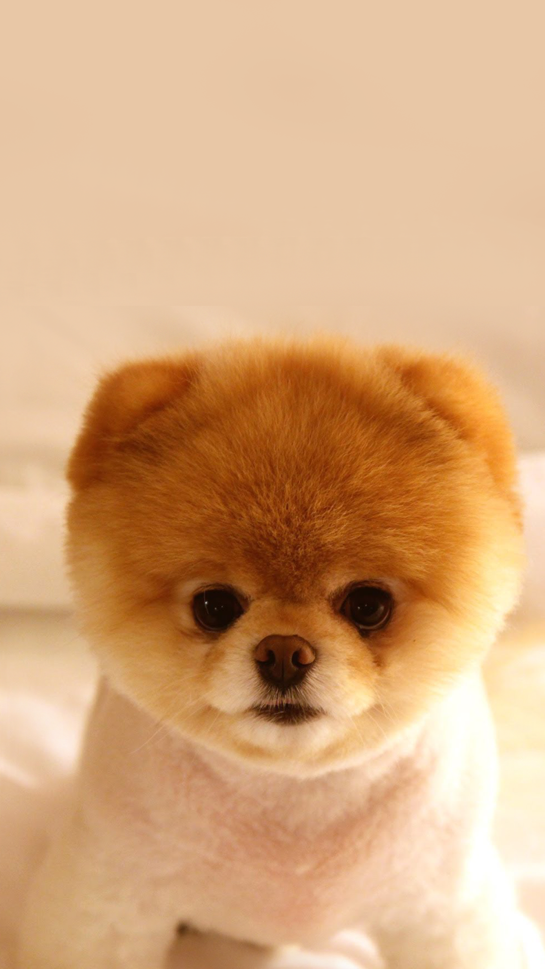 Ultra HD Cutest Puppy Dog Wallpaper For Your Mobile Phone